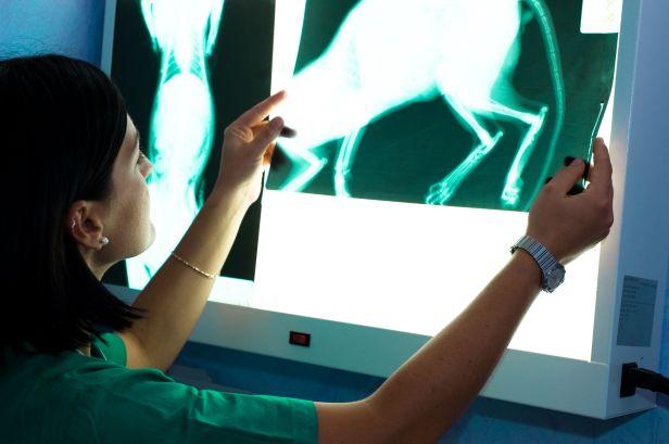 veterinarian-examines-x-ray-of-cat-84438280-57545b5e5f9b5892e8a51d26